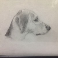 Danny's Dog Drawing